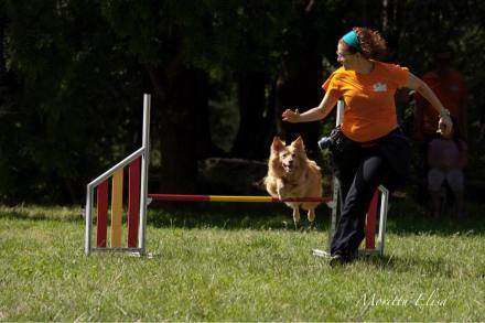 sport cinofili (9)