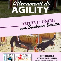agility2